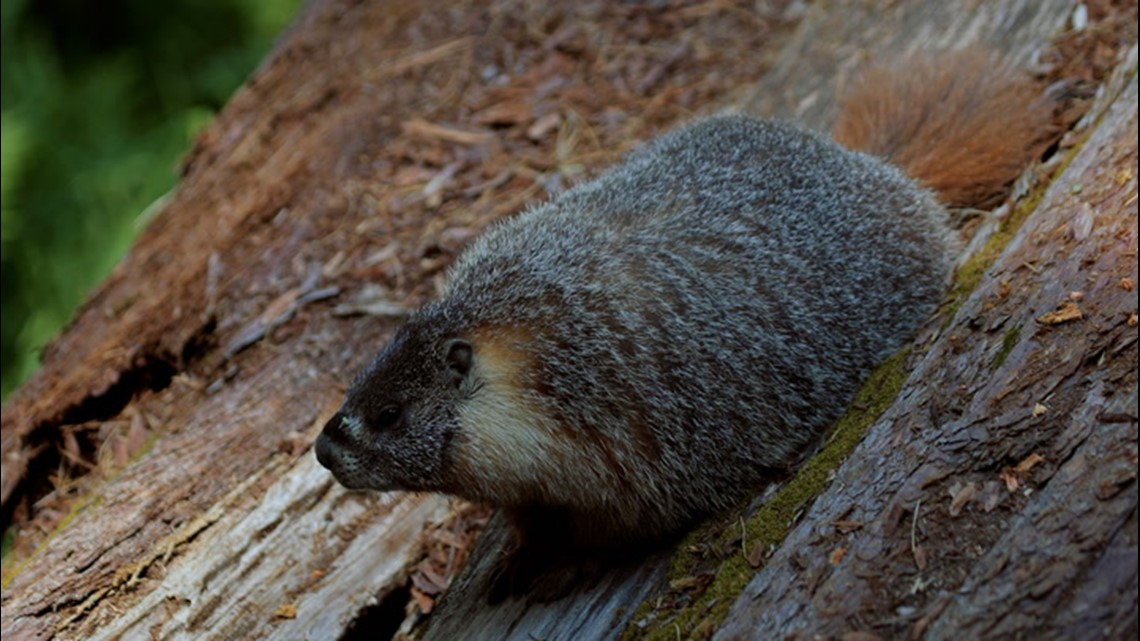 Keeping your car safe from cute critters at National Parks