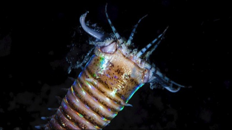These Monster Worms Once Roamed the Ocean Floor 20 Million Years Ago
