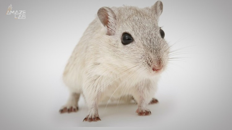 Scientists Induce Hallucinations in Mice to Study the Nature of Psychotic Disorders