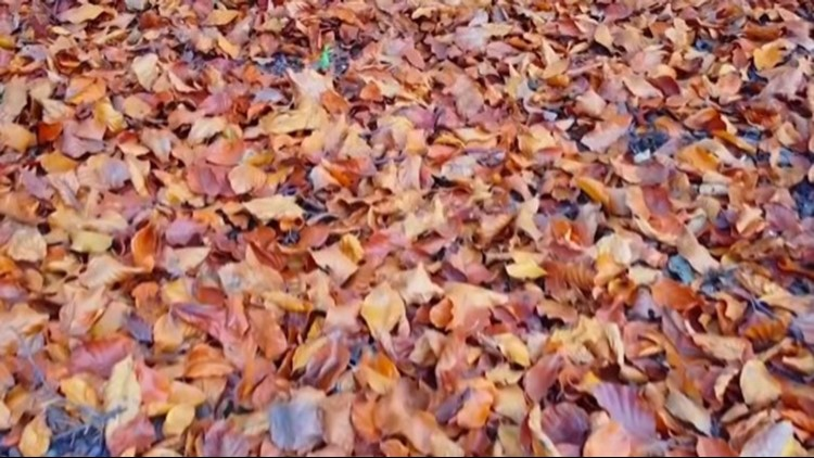 How One Student Is Turning Fallen Leaves Into Paper To Save The Environment