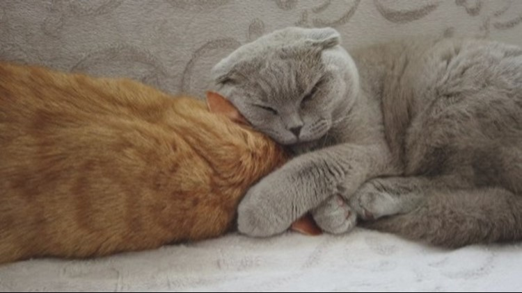 Did You Know That Cats Are Very Choosy About Their Friends?