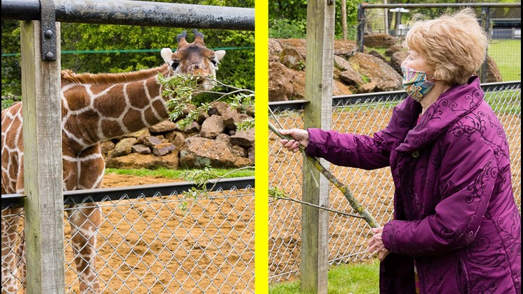 Heart-melting Moment the First Person in the World to Receive COVID-19 Vaccine Meets Baby Giraffe Born on that Same Day