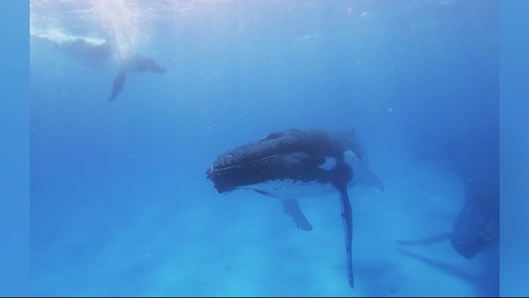 This Amazing Footage Shows These Whales Making Human Friends