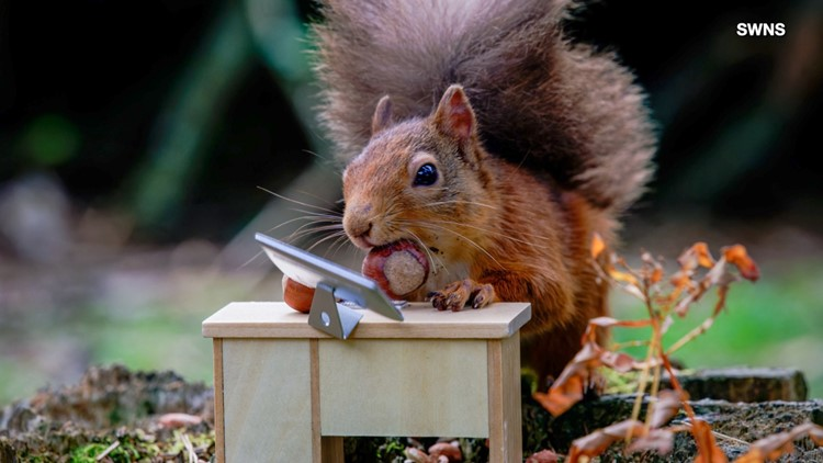 This Adorable Tiny Squirrel Went Nuts at Work
