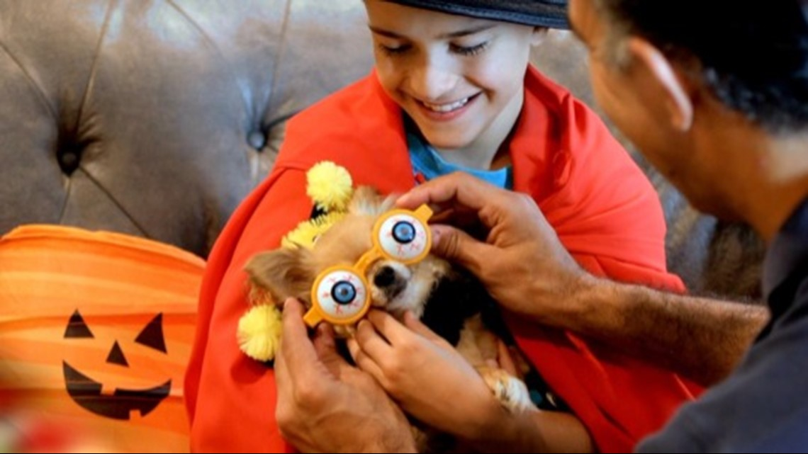 How to keep your pet safe on Halloween