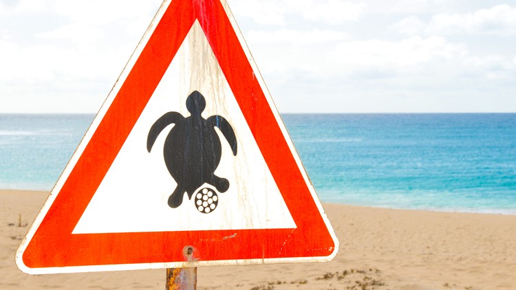 Police: Teens poured alcohol on nesting sea turtle