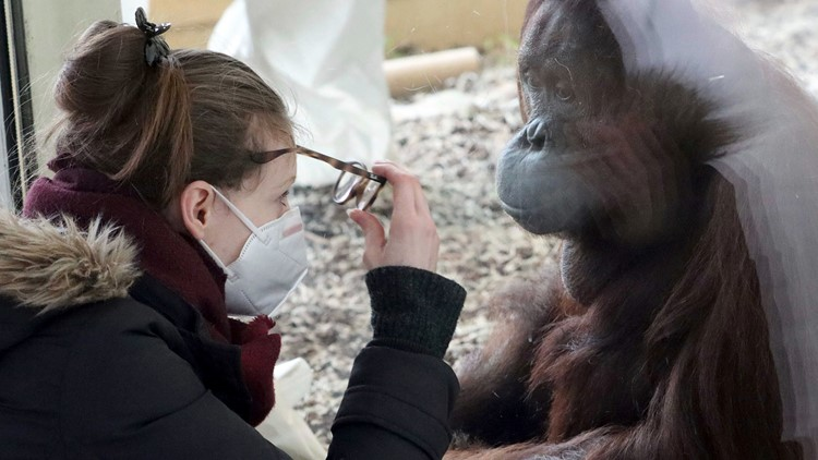 Zoos, scientists aim to curb people giving coronavirus to animals