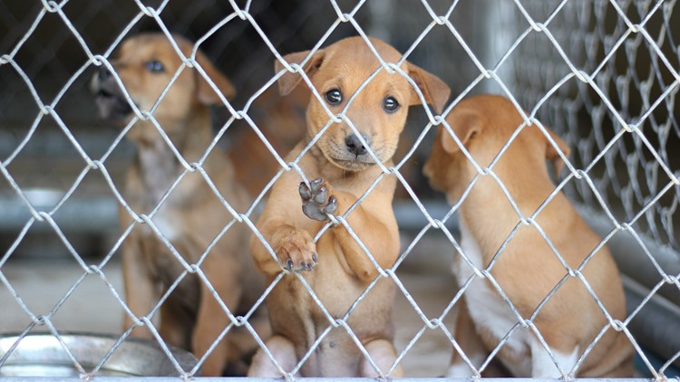 Lawmakers introduce bill to create stronger dog breeding standards