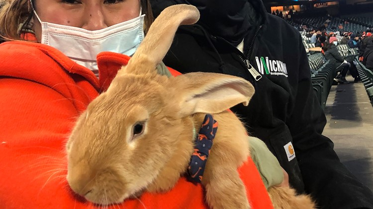 Therapy bunny for woman who lost restaurant during COVID is star at Giants ballpark