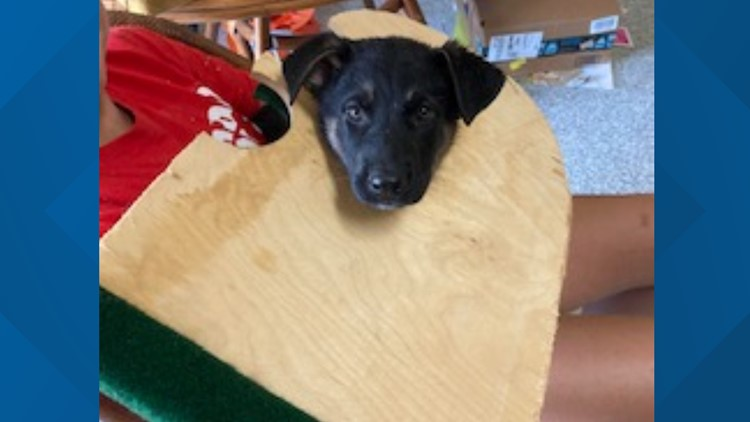 Puppy trapped in cornhole board | Officers race to save 'Ace in the hole'