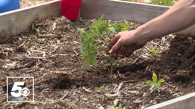 5NEWS Garden Club: Growing Tomatoes