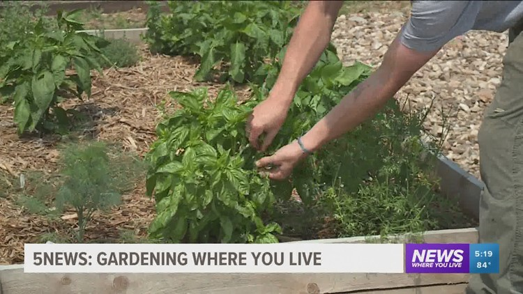 Garden Club: Maintaining Your Garden