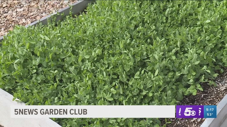 5NEWS Garden Club: Using Cover Crops To Protect Your Beds
