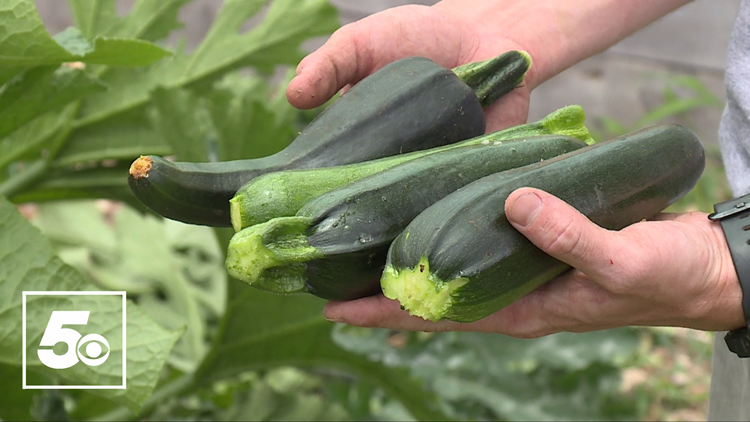 5NEWS Garden Club: Harvesting, clearing and planting in your garden