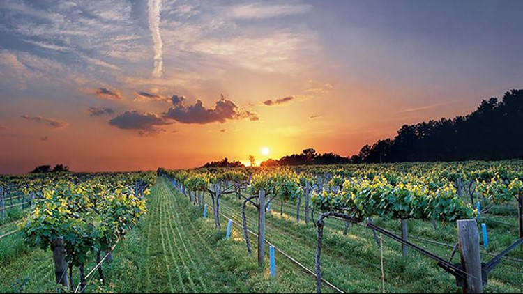 Arkansas vineyards have two new grape options