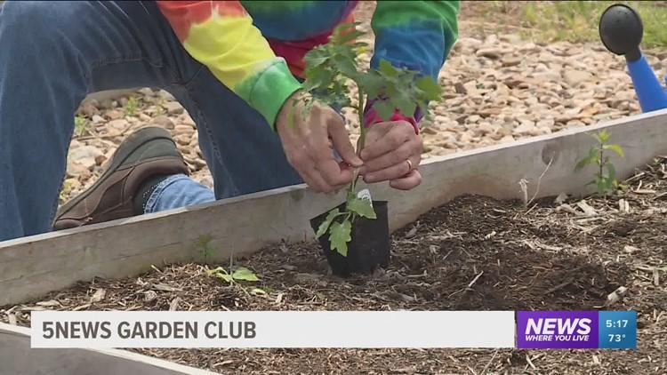 5NEWS Garden Club: Planting Tomatoes