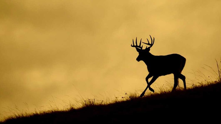 Cherokee Nation to hold first controlled deer hunt on new Sequoyah Co. preserve land