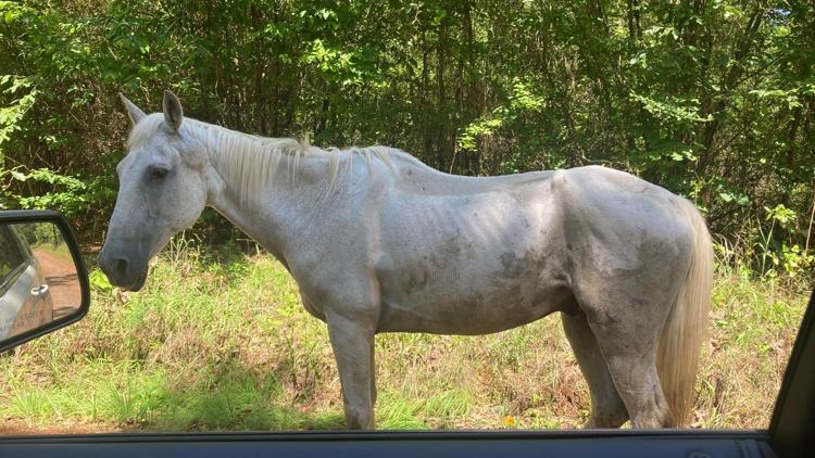 Crawford Co. Sheriff's Office looks for owner of very unhealthy horse