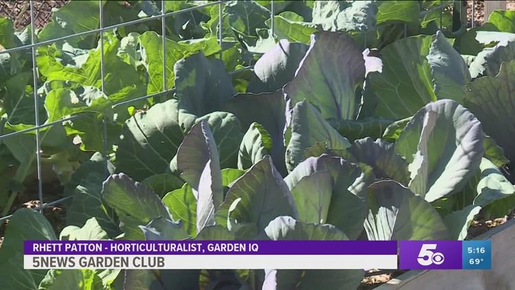 Garden Club: Last Harvest of the Season
