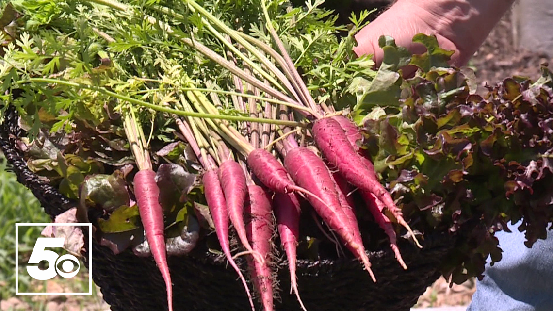 5NEWS Garden Club: Garden maintenance tips