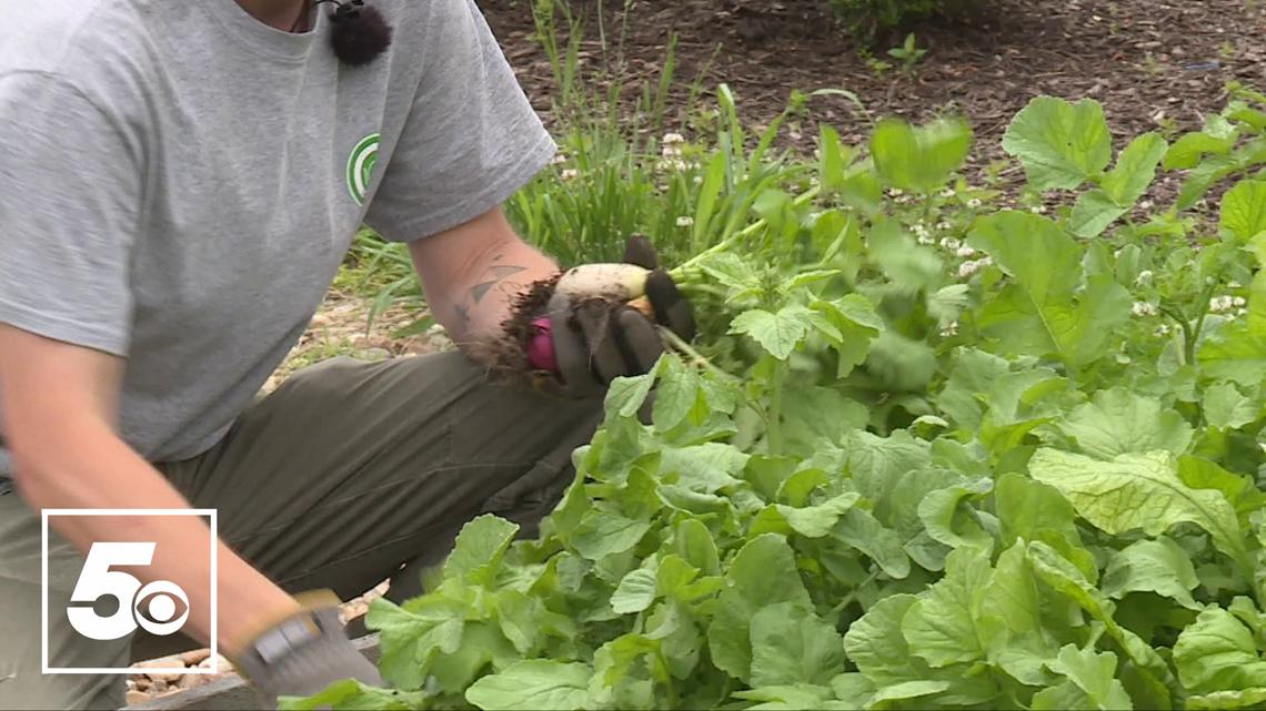 5NEWS Garden Club: Harvesting vegetables