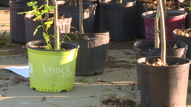 City of Gravette to host tree giveaway