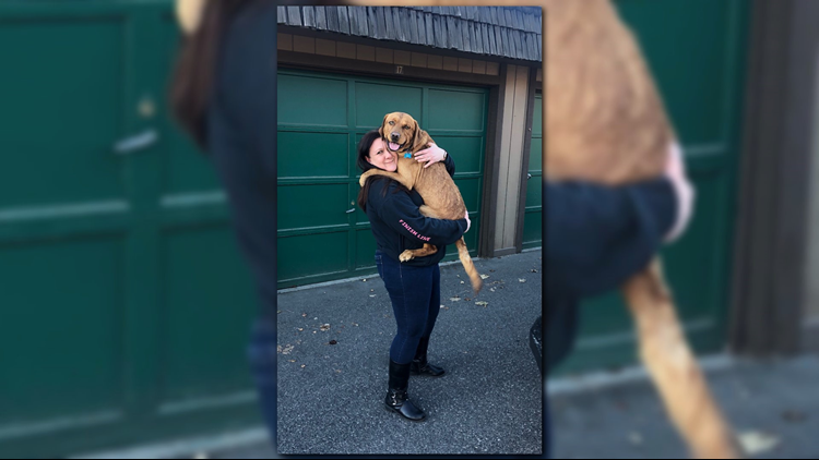 'I got my baby back': Dog reunited with owner on Christmas Eve after it was briefly stolen