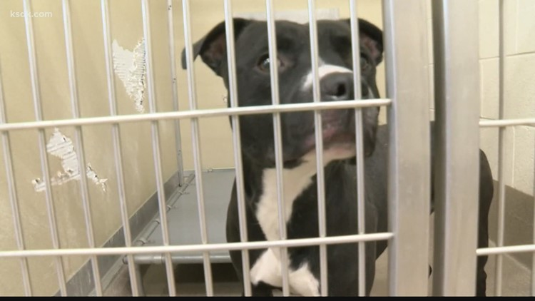 Eviction crisis leaves thousands of pets without a home