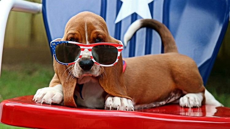 Fireworks can be scary! | Here's how to keep pets safe during the Fourth of July