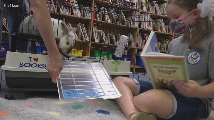 Dewey, a Little Rock library pet rabbit, is encouraging students to read