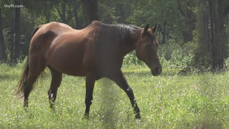 Arkansas horse owner warns of fatal disease after three of her horses die