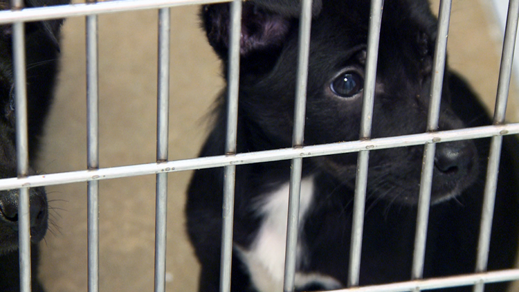 How the pandemic has changed the way people in Arkansas adopt pets