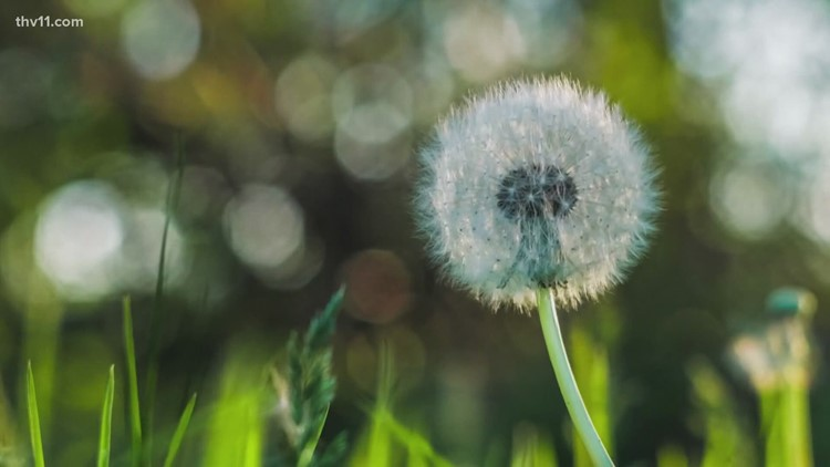 Is climate change making allergy season in Arkansas worse?