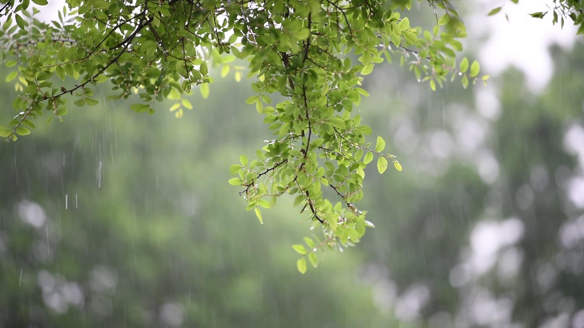 Kvue Moment Of Zen Rain 10tv Com