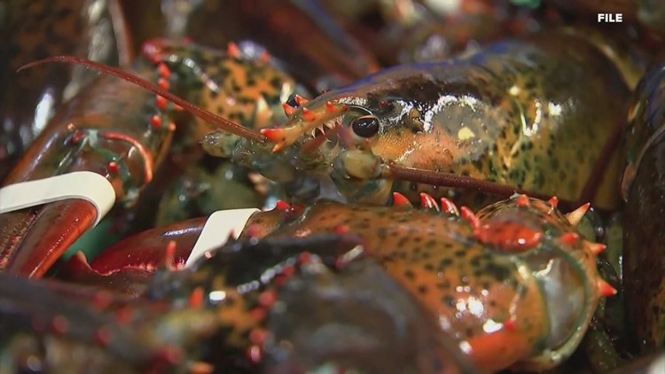 Maine lobsters blamed for COVID in China-linked disinformation campaign: report