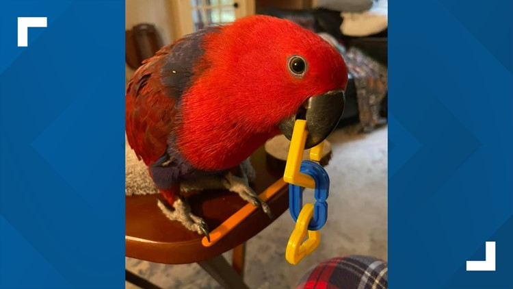 After eight days, Delilah the parrot returns to her East Memphis home