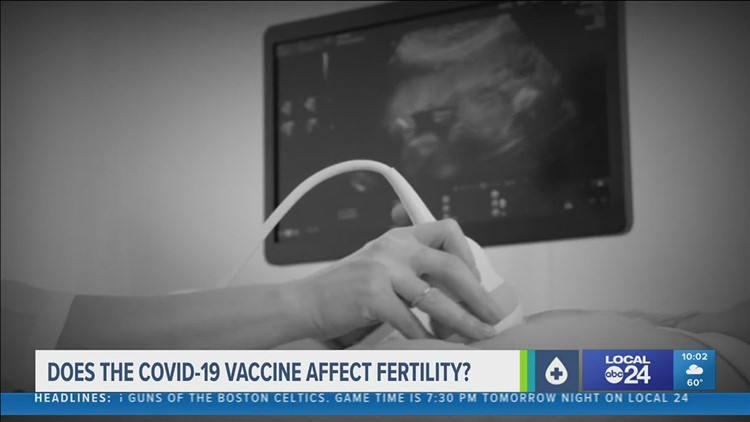 Does the COVID-19 vaccine affect fertility?