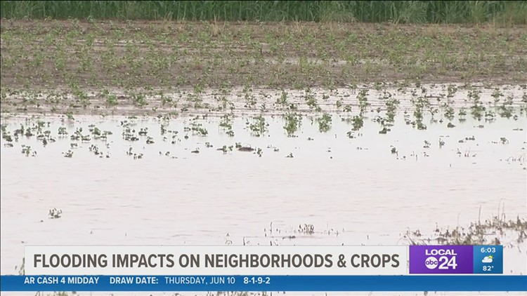 'We've got a real catastrophe on our hands'   Flooding impacting Clarksdale, Mississippi, neighborhoods & farmers