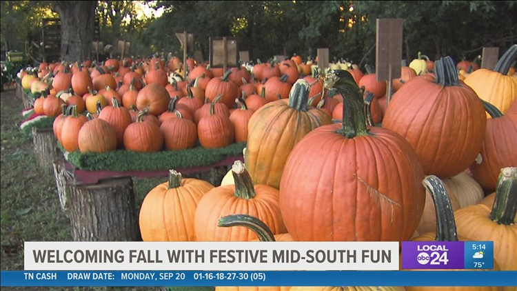 Jones Orchard readies for fall fun with pumpkins, haunted attractions, and corn maze