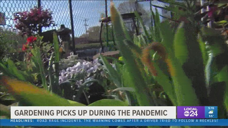 Gardening boom expected to continue this spring