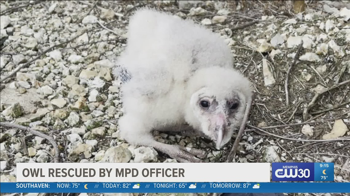 Baby owl is safe thanks to a MPD officer