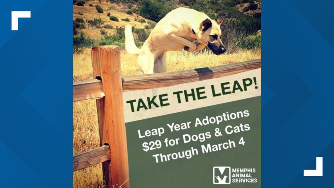 Take the Leap! Memphis Animal Services celebrates Leap Day with $29 adoptions