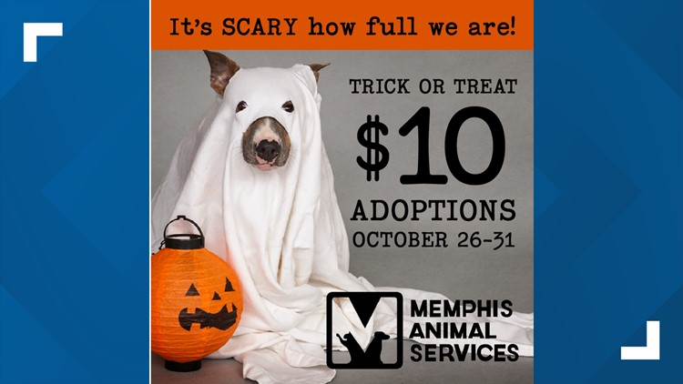 Scarily good offer: Adopt a dog or cat from Memphis Animal Services for $10 through Halloween