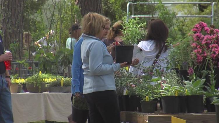 The Memphis Botanic Garden hosts popular Spring Plant Sale online