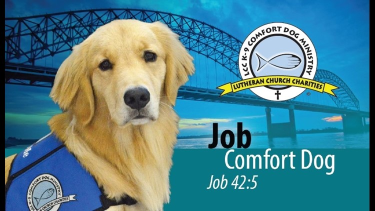Job the Comfort Dog brings joy to Collierville shooting victims