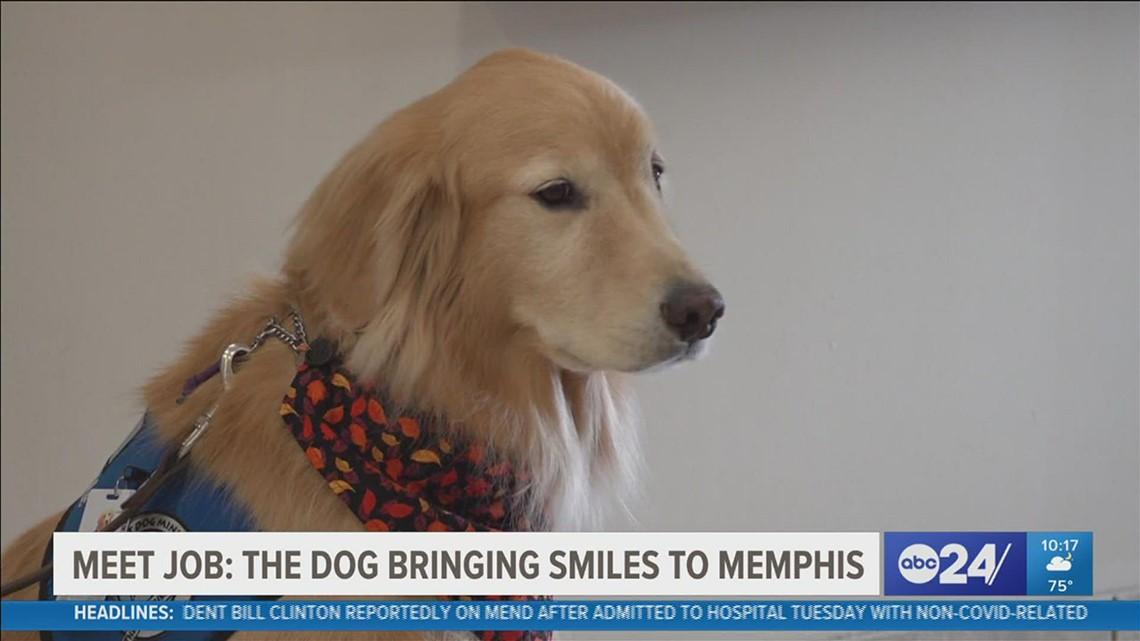 "Meet Job, a Mid-South comfort dog: ""He is a very calming presence"