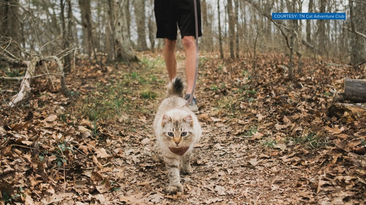 TN woman creates Cat Adventure Club