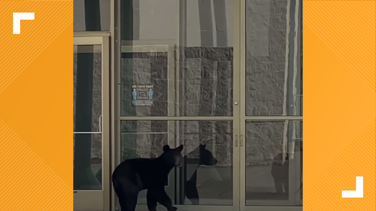 WATCH: Bear spotted trying to get into College Square Mall in Morristown, TN