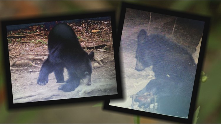 Non-profits working to save bears from poaching in East Tennessee and surrounding areas