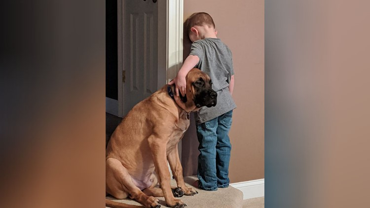Viral photo shows dog joining Ohio boy in timeout